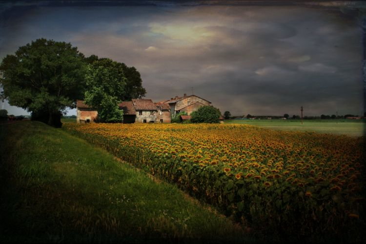 landscape style sunflowers home wallpaper