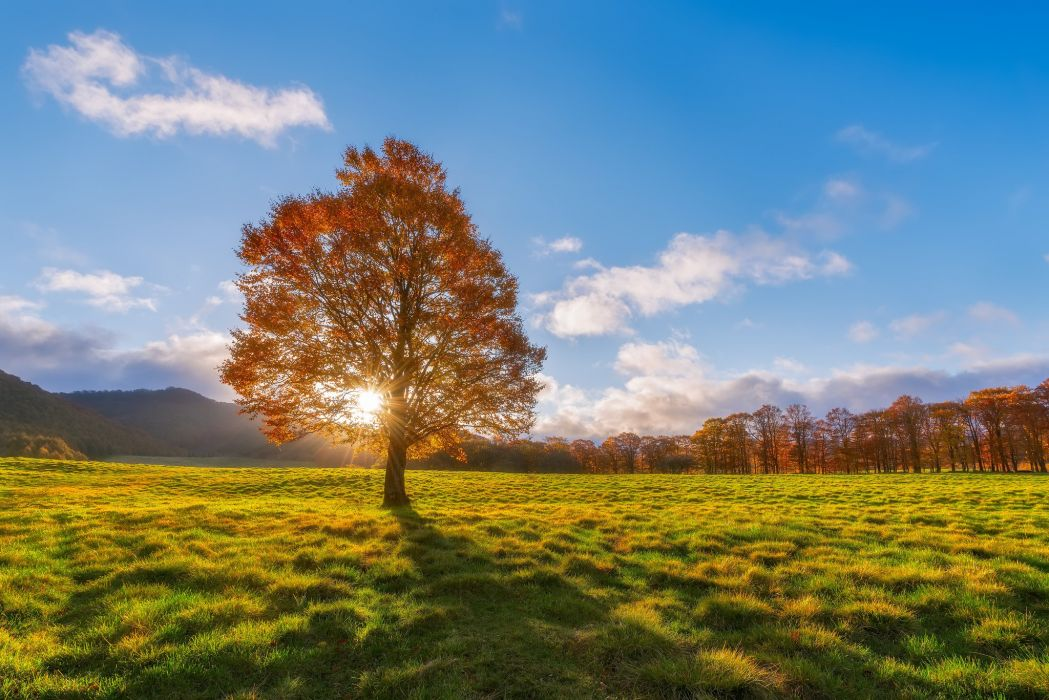 autumn sun tree field rays wallpaper