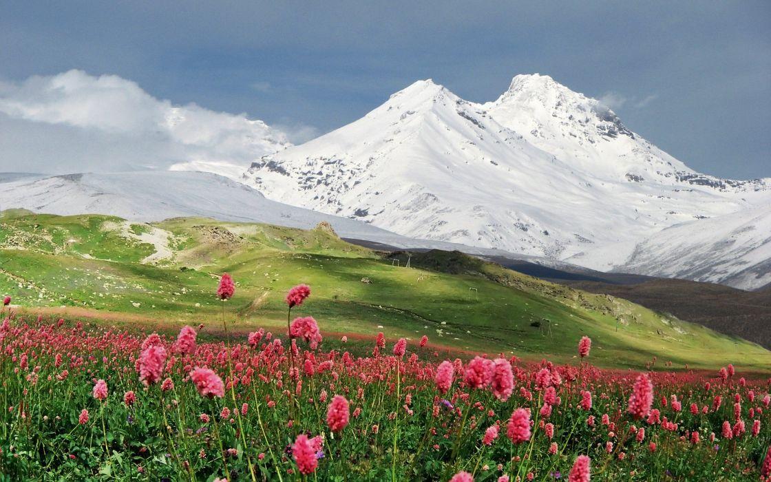 mountain flowers field landscape wallpaper