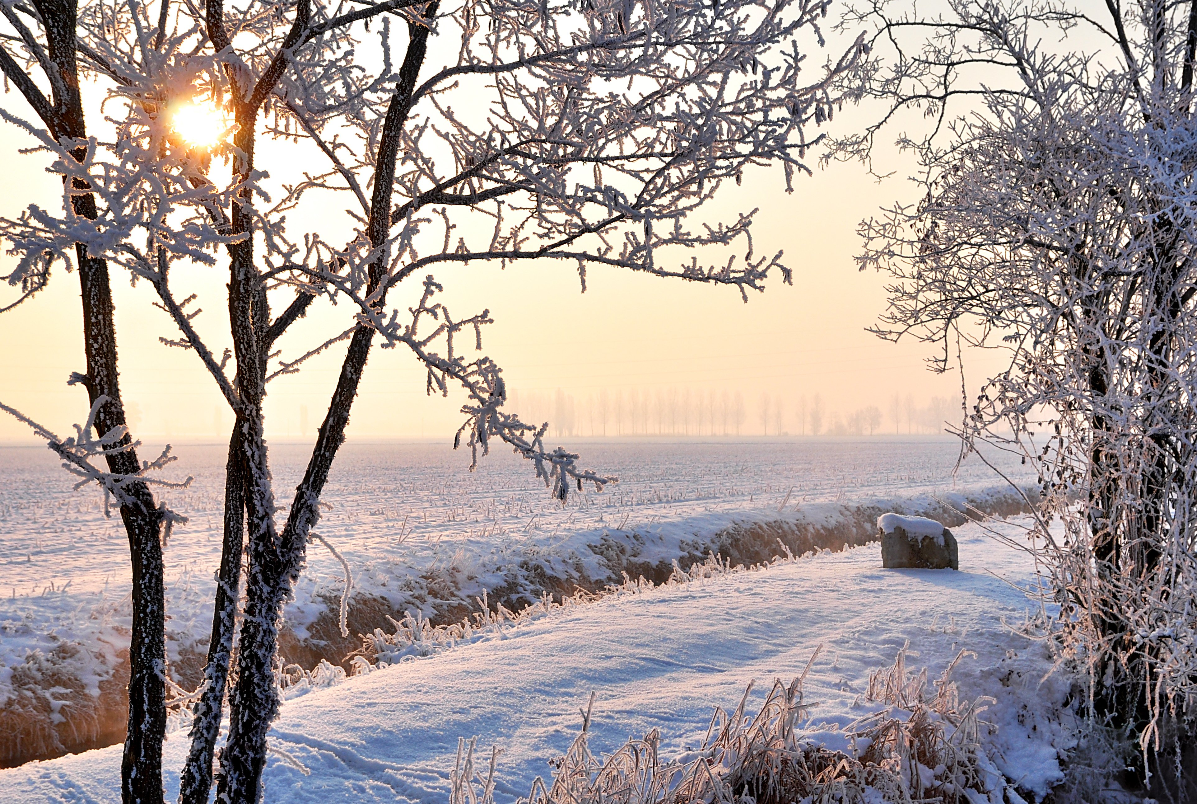 winter trees frost snow-#9