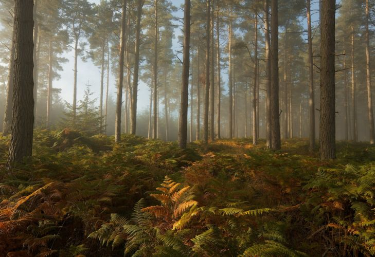 forest trees fern nature wallpaper
