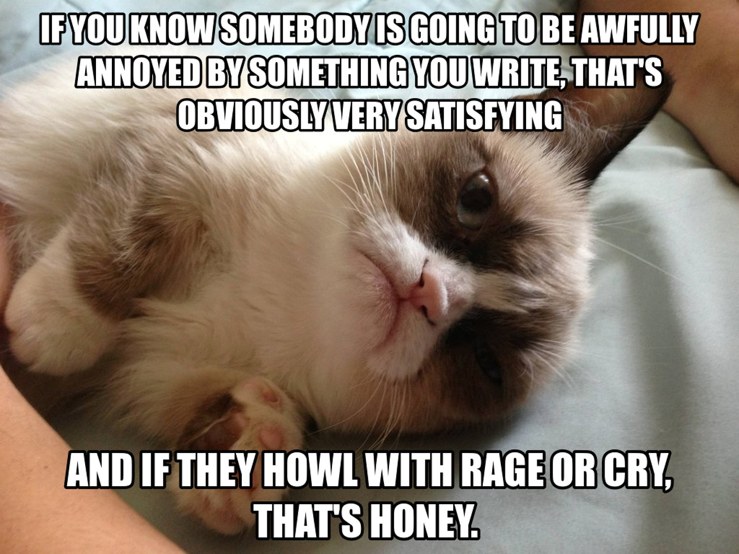 Funny Grumpy Cat Pictures With Quotes Grumpy Cat