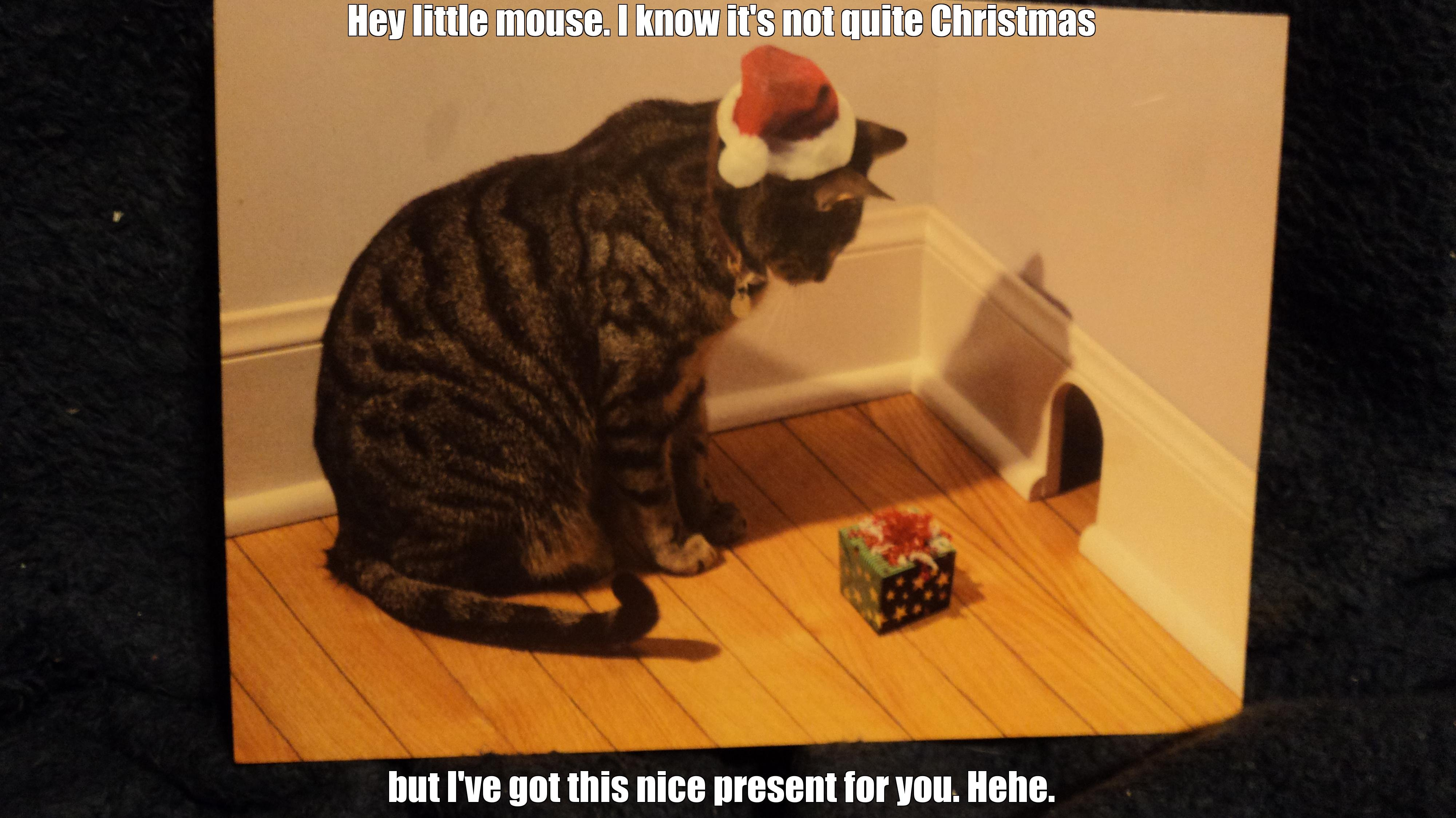 Funny Christmas Cat Memes