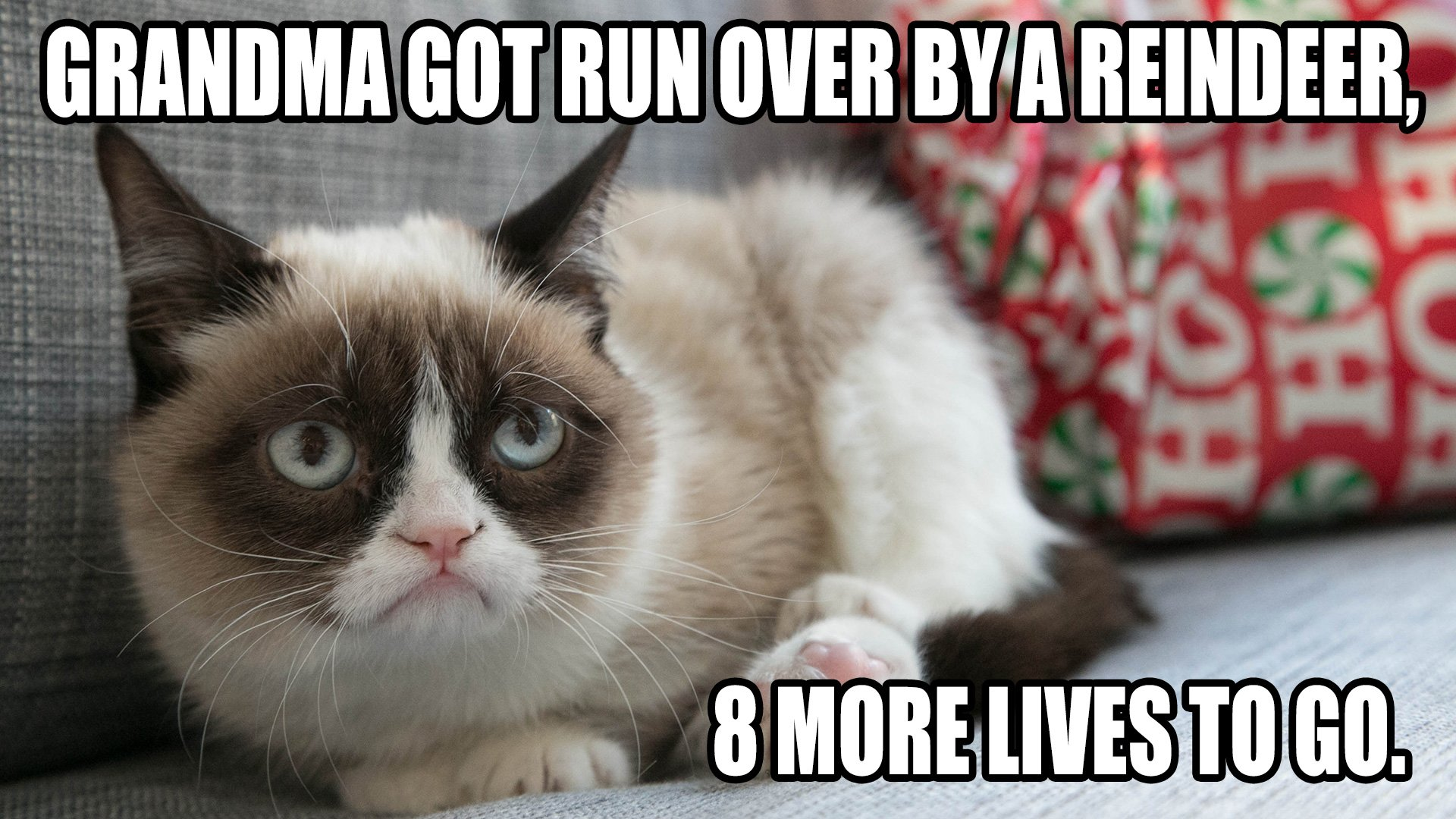 Cat meme quote funny humor grumpy (7) wallpaper ...