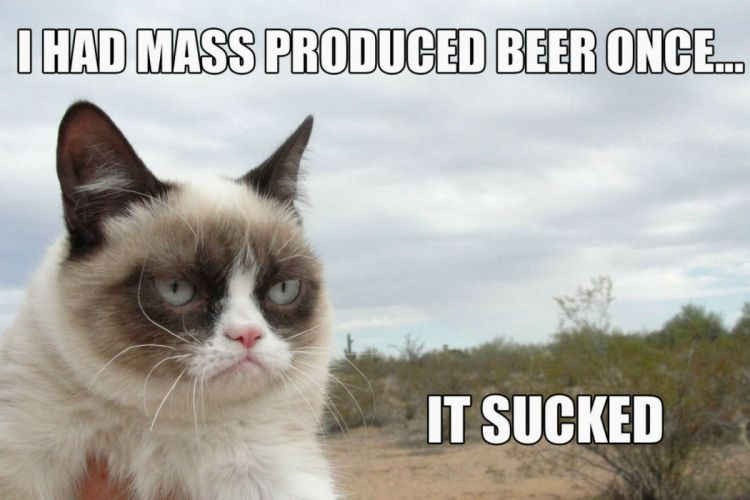 cat meme quote funny humor grumpy beer wallpaper