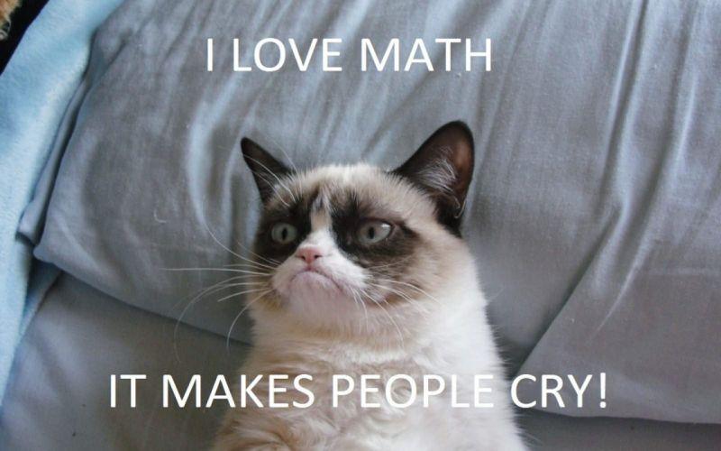 cat meme quote funny humor grumpy (22) wallpaper