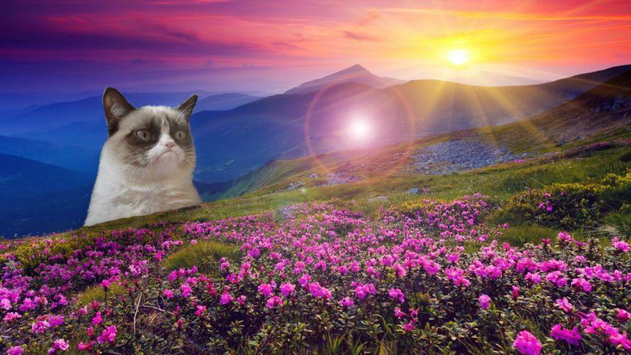 cat meme quote funny humor grumpy (20) wallpaper