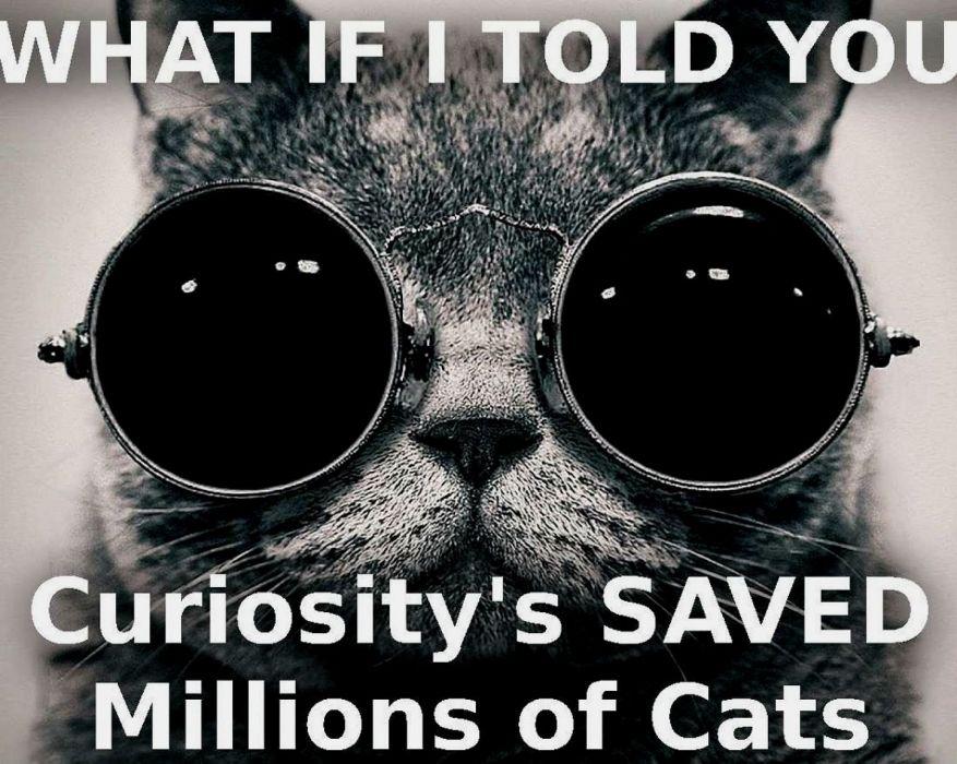 cat meme quote funny humor grumpy (47) wallpaper