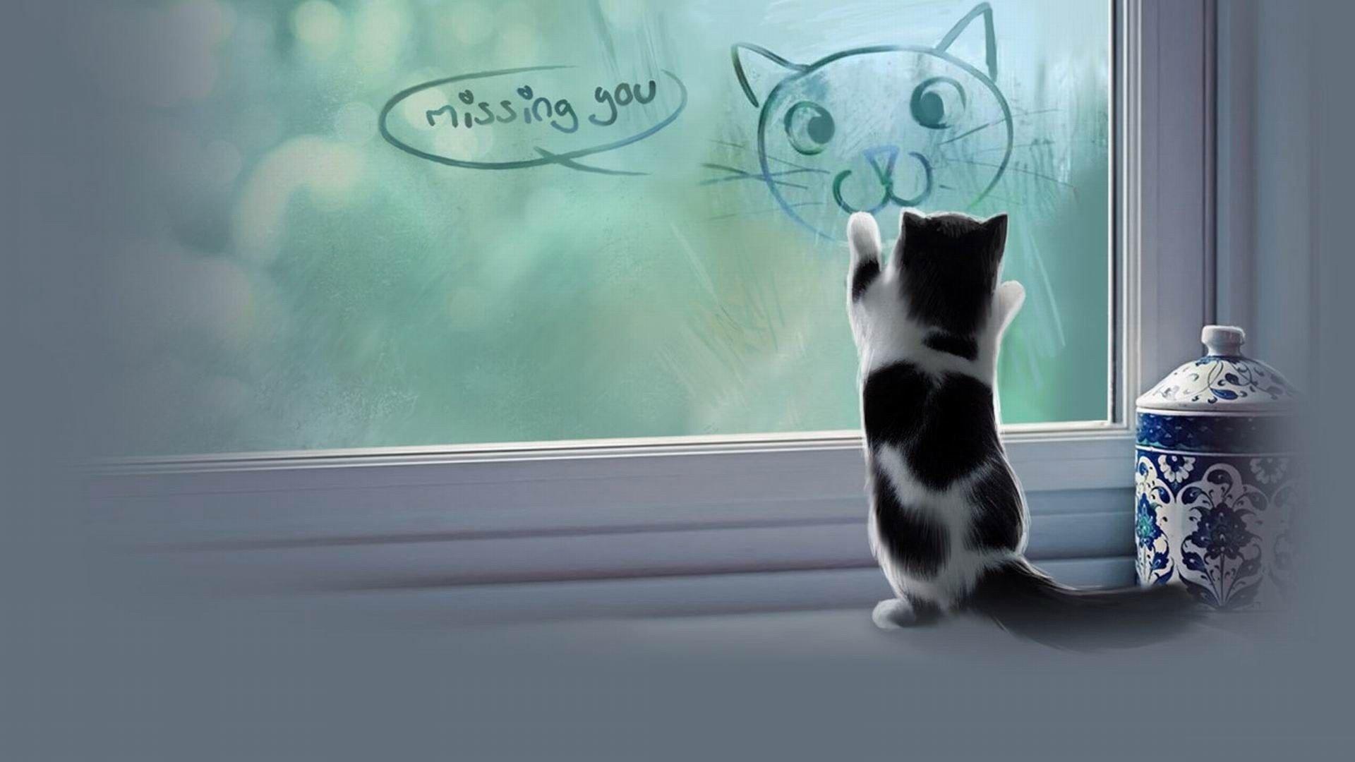 Cat meme quote funny humor grumpy kitten sad love mood wallpaper  1920x1080 ...