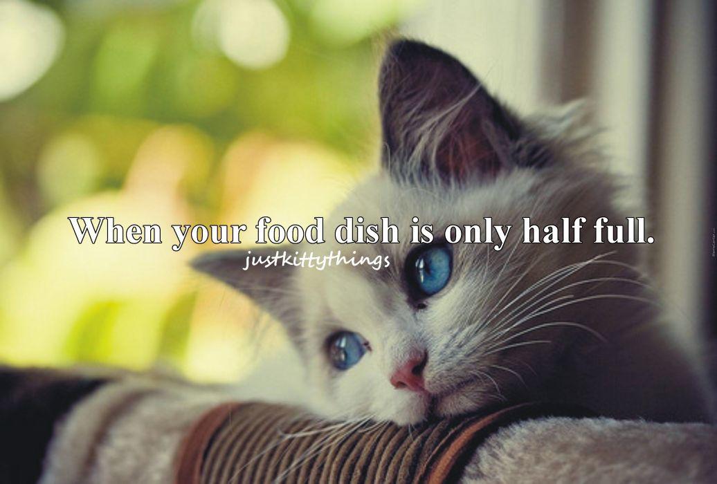 Cat Meme Quote Funny Humor Grumpy Kitten Sad Mood Wallpaper