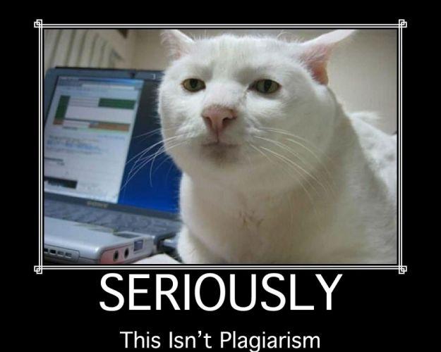 cat meme quote funny humor grumpy (59) wallpaper