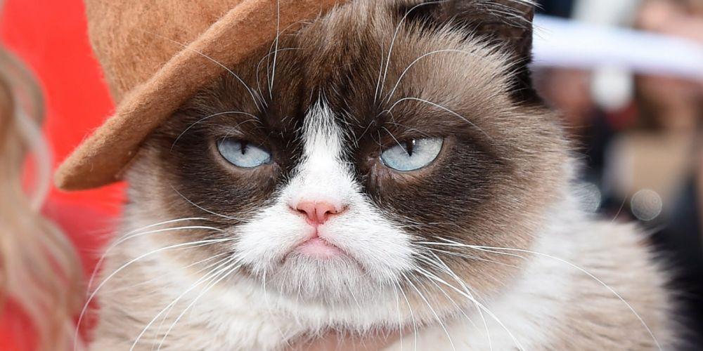 cat meme quote funny humor grumpy (51) wallpaper