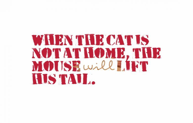 cat meme quote funny humor grumpy (70) wallpaper