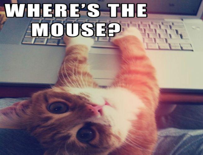 cat meme quote funny humor grumpy computer wallpaper
