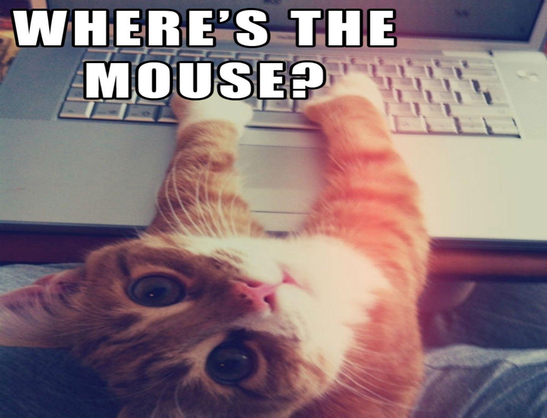 Funny Computer Backgrounds Meme : Cat meme quote funny humor grumpy computer wallpaper