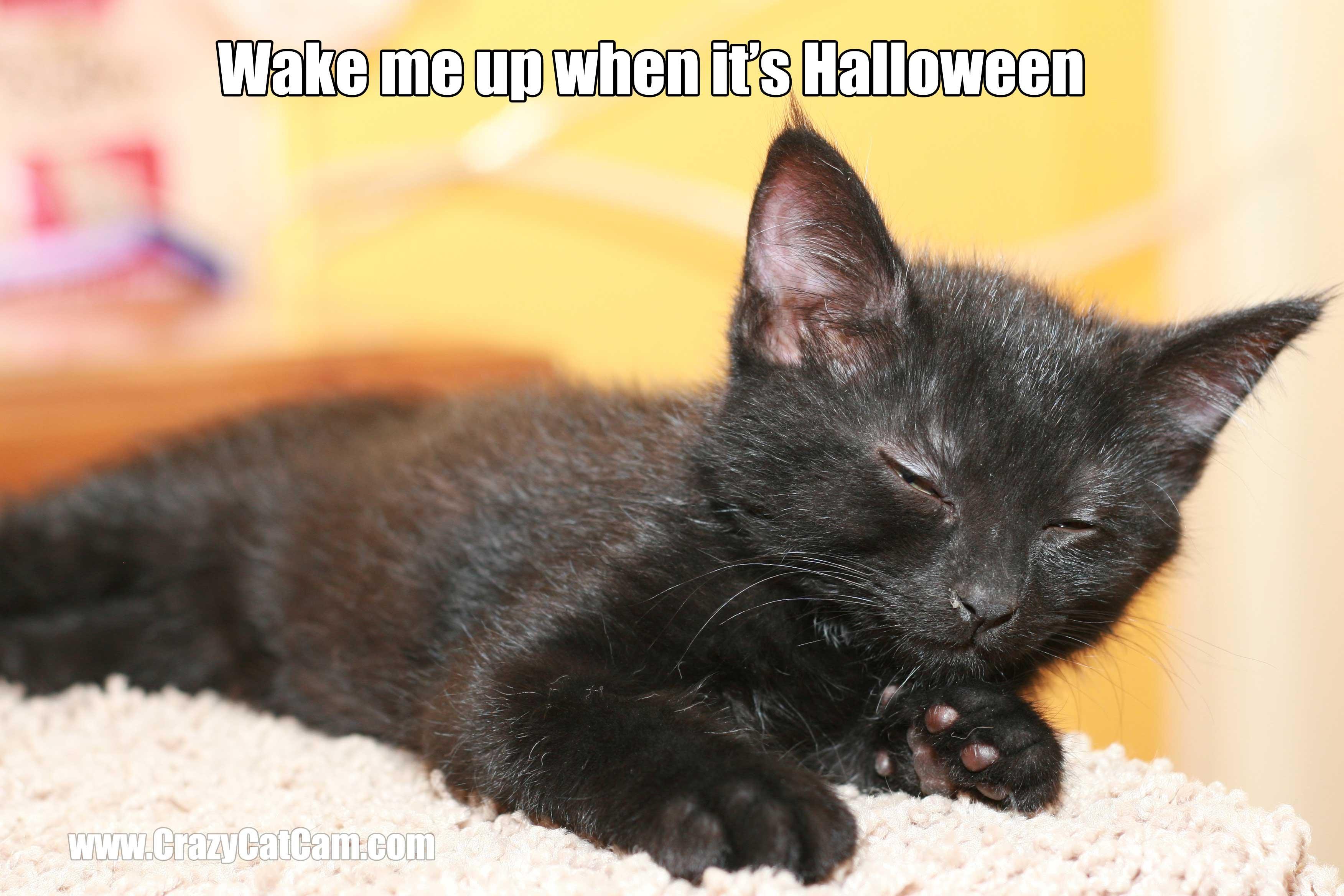 Charming Cat Meme Quote Funny Humor Grumpy Kitten Wallpaper | 3504x2336 | 355157 |  WallpaperUP