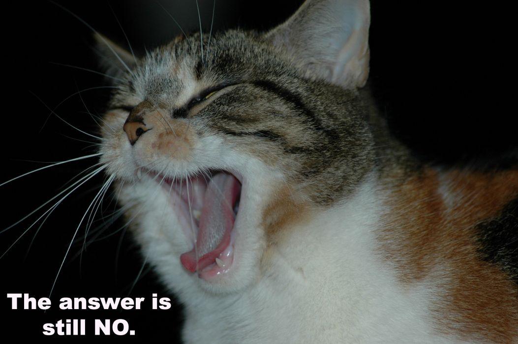 cat meme quote funny humor grumpy (62) wallpaper