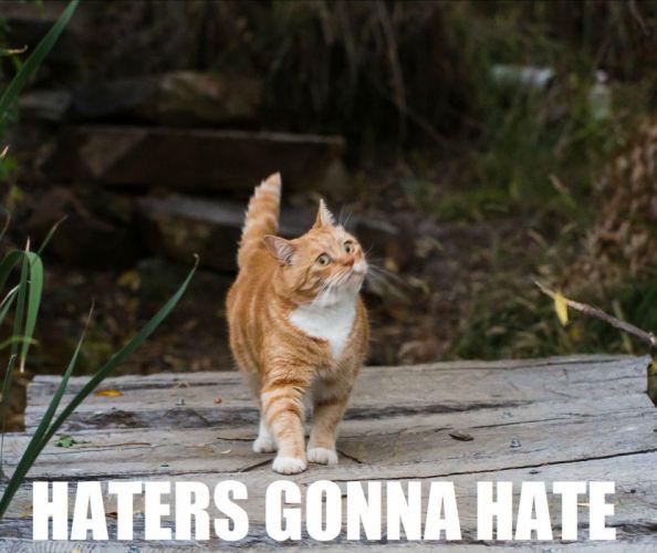 cat meme quote funny humor grumpy sadic wallpaper