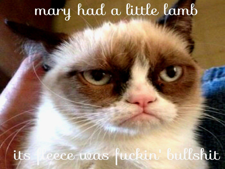 Funny Meme Phone Wallpapers : Cat meme quote funny humor grumpy sadic wallpaper 1440x1080