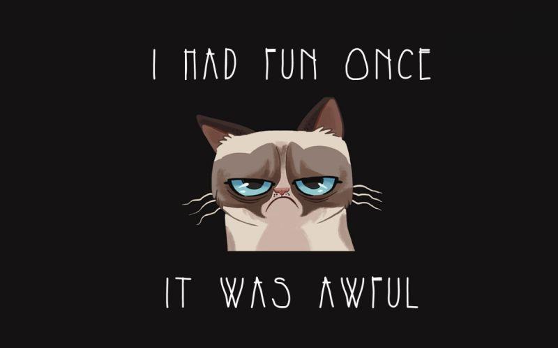 cat meme quote funny humor grumpy (82) wallpaper