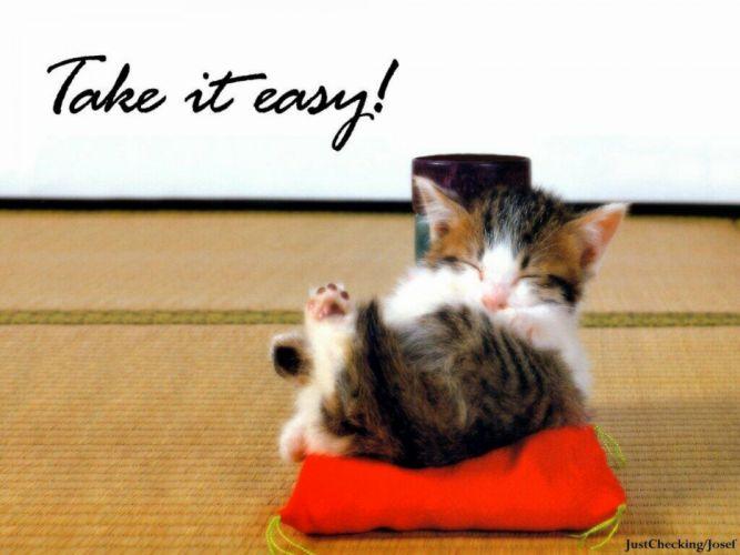 cat meme quote funny humor grumpy kitten wallpaper