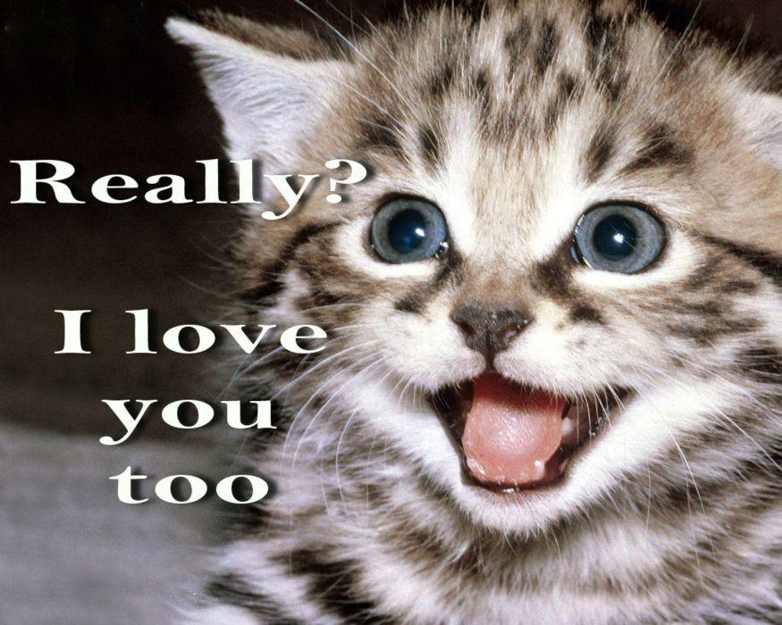 Ordinaire Cat Meme Quote Funny Humor Grumpy Kitten Mood Love Wallpaper