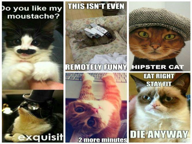 cat meme quote funny humor grumpy (92) wallpaper