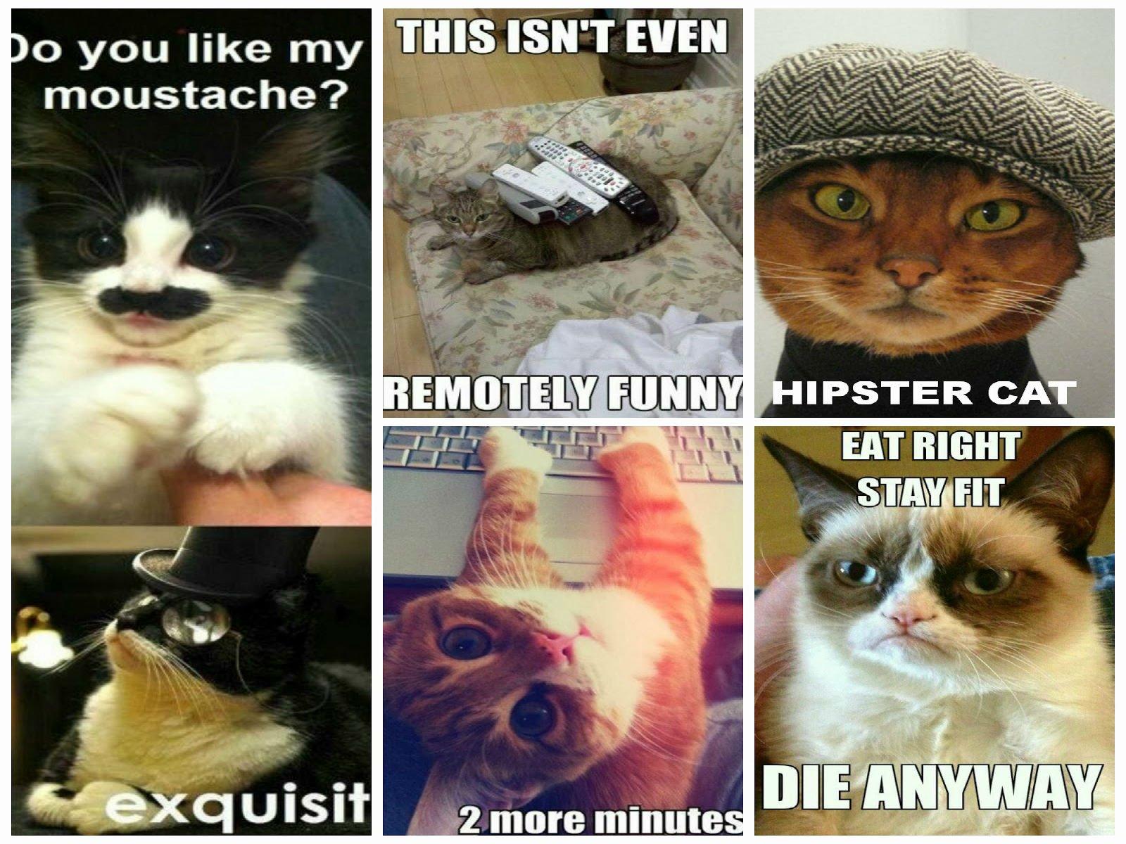 cat meme quote funny humor grumpy 92 wallpaper 1600x1200 355181