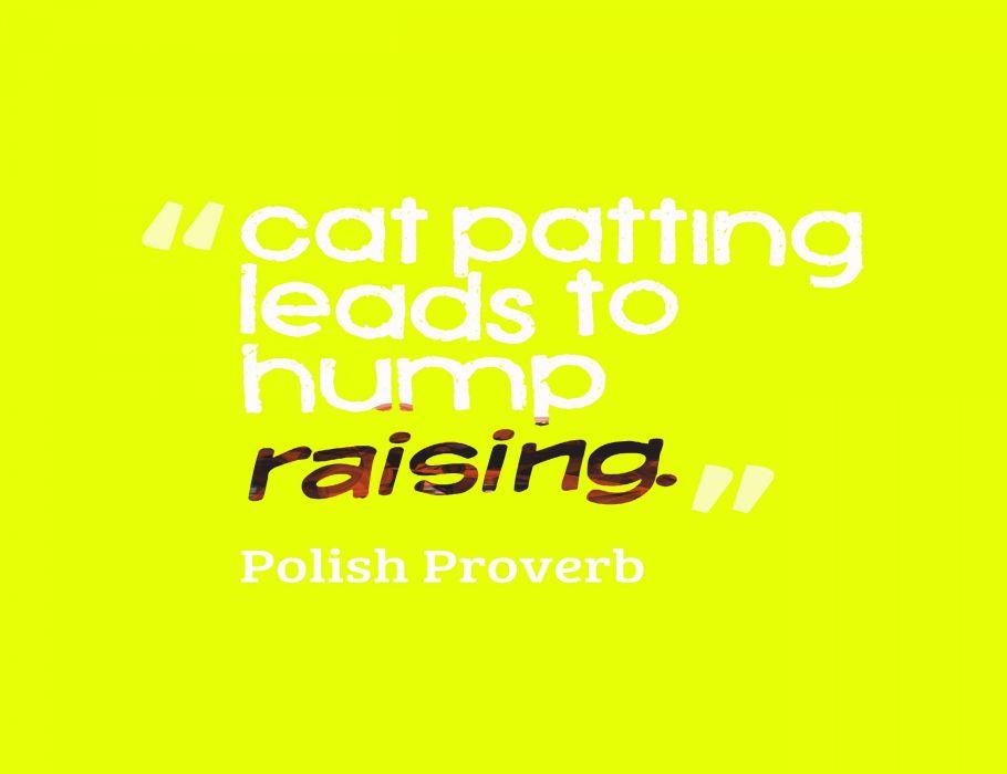 cat meme quote funny humor grumpy (98) wallpaper