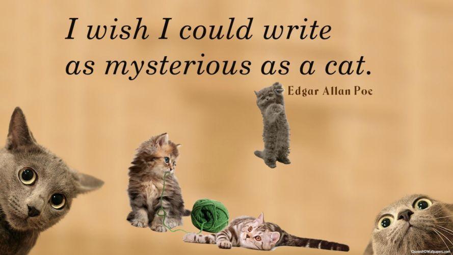 cat meme quote funny humor grumpy (100) wallpaper