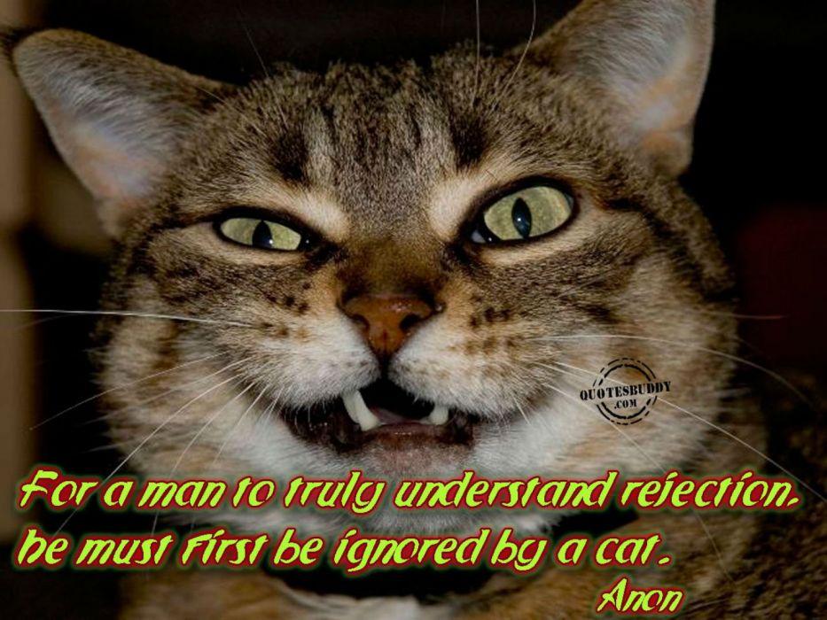 cat meme quote funny humor grumpy (111) wallpaper