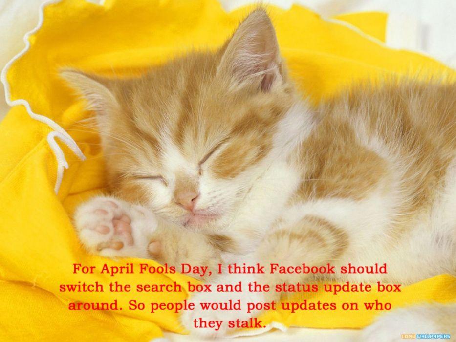 cat meme quote funny humor grumpy computer facebook kitten wallpaper