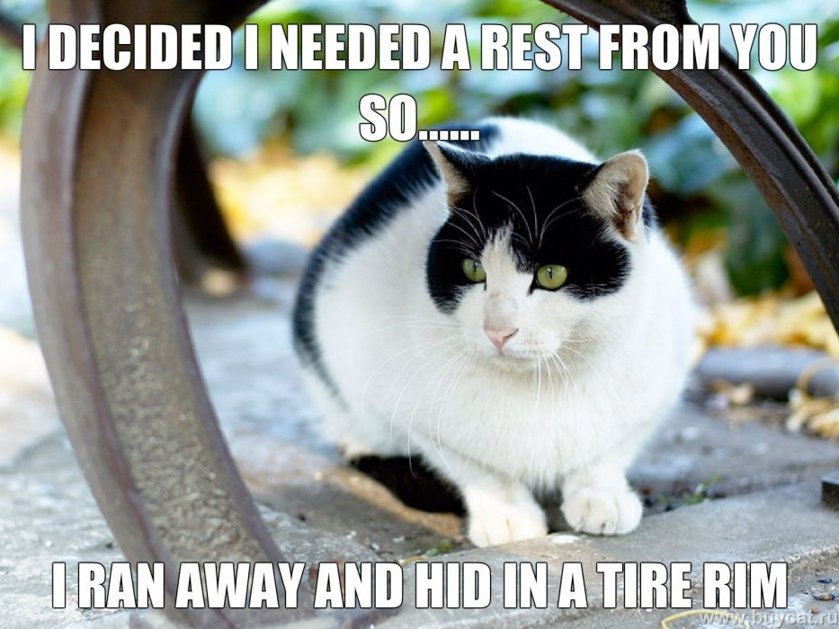 cat meme quote funny humor grumpy (119) wallpaper