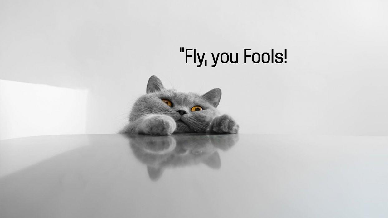 cat meme quote funny humor grumpy (125) wallpaper