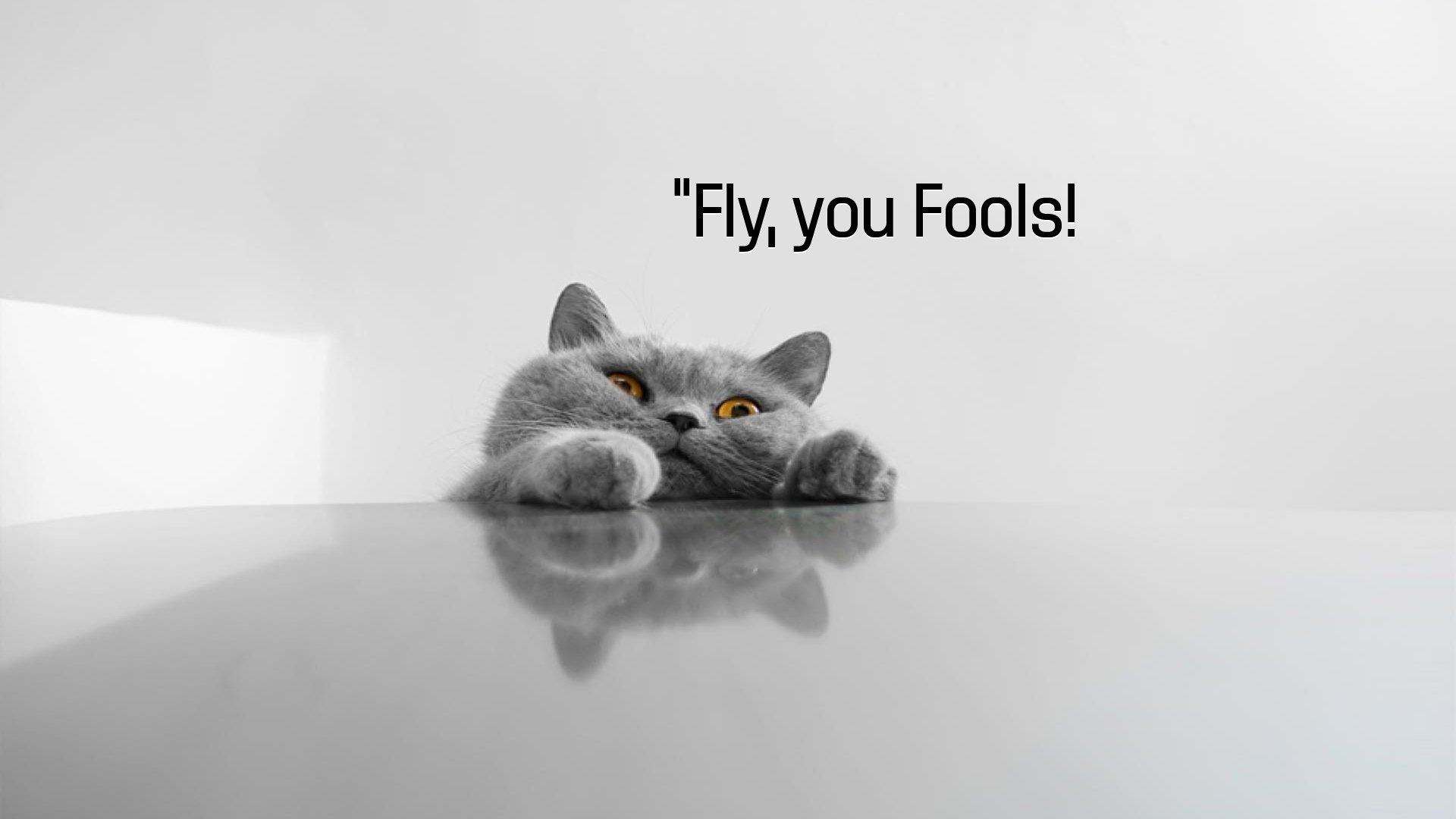 cat meme quote funny humor grumpy 125 wallpaper