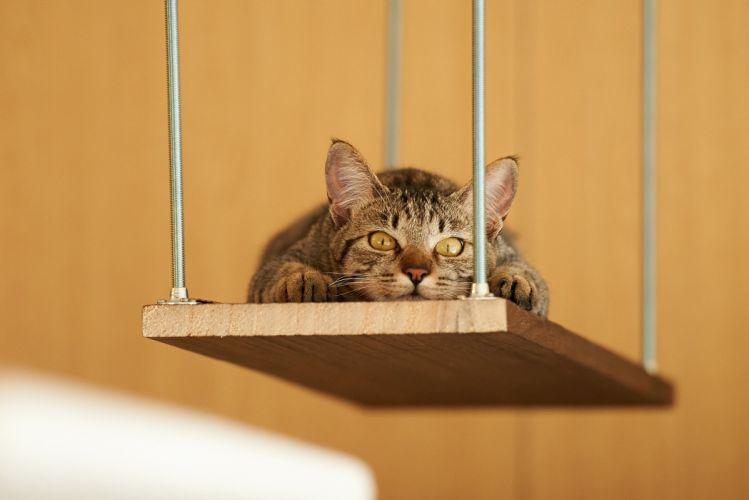 cat shelf lying rest wallpaper