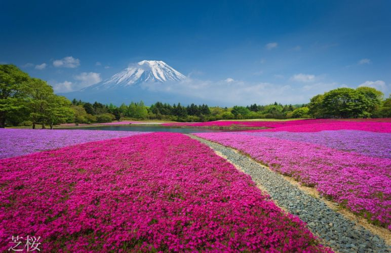 china mountain flowers nature volcano wallpaper