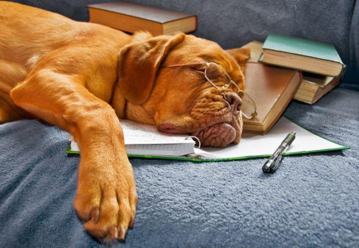 dog sleeping books book glasses wallpaper