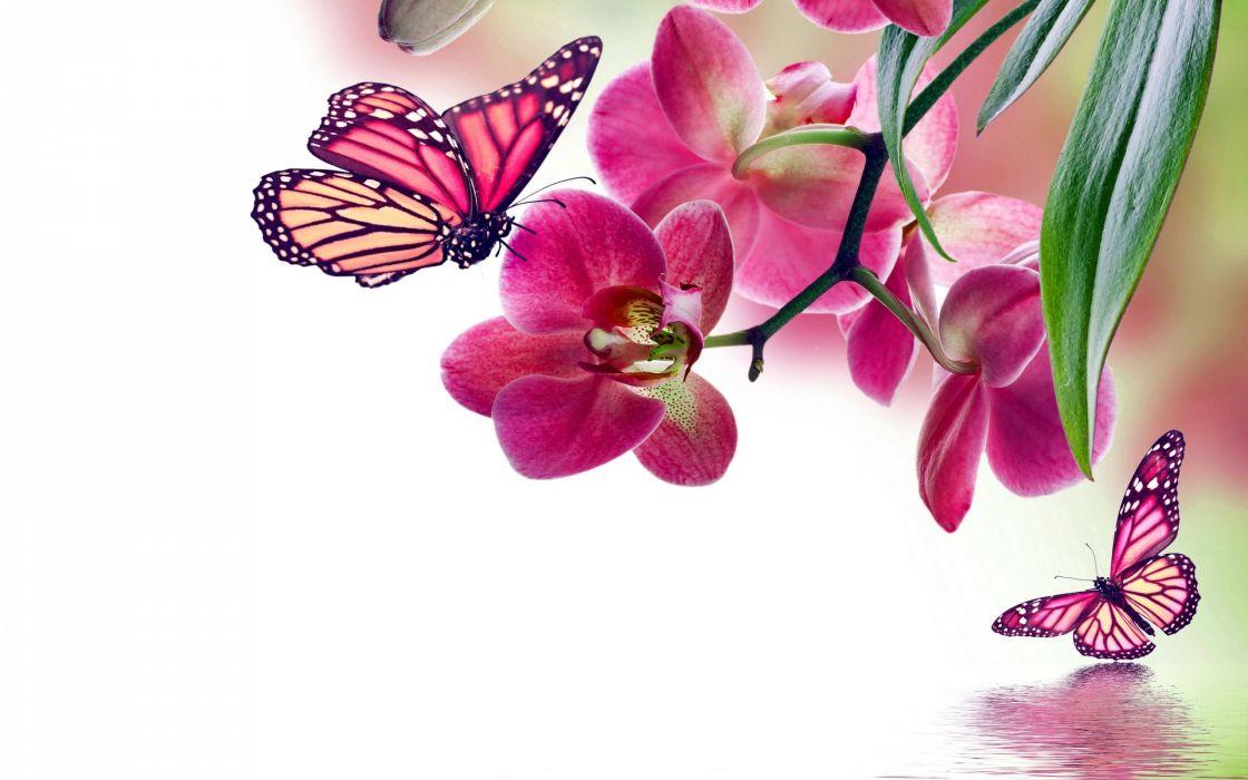 flowers background butterfly bokeh  j wallpaper