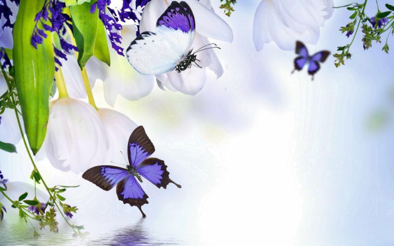 flowers background butterfly u wallpaper
