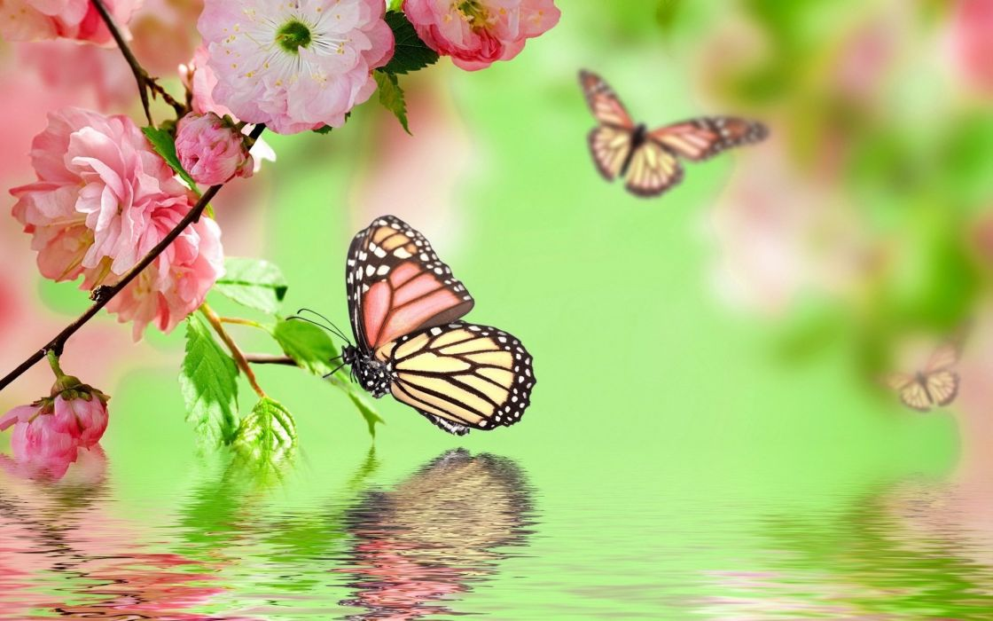 flowers background butterfly bokeh       j wallpaper