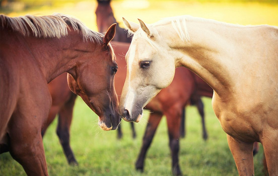 grass horse horses animals couple wallpaper