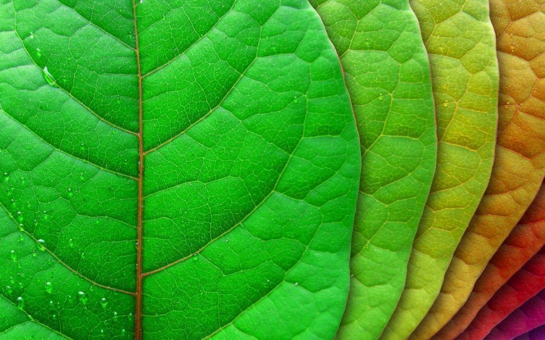 leaves dew drops water color macro wallpaper