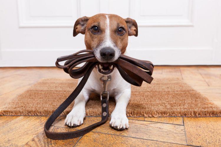 leash mat dog door wallpaper