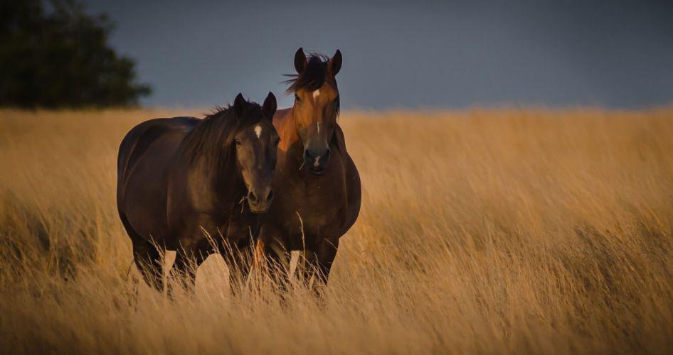 nature couple grass field horse wallpaper