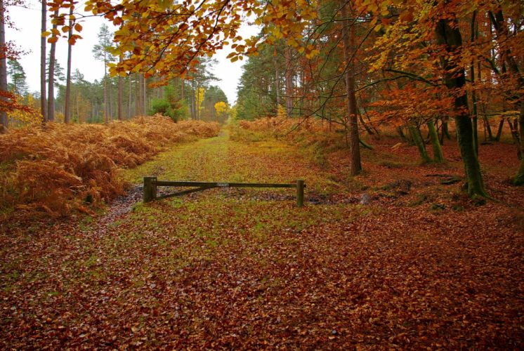 New Forest in Hampshire England autumn landscape wallpaper