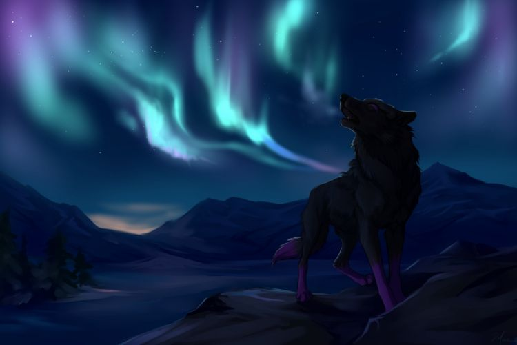 northern lights mountains wolves star wolf wallpaper
