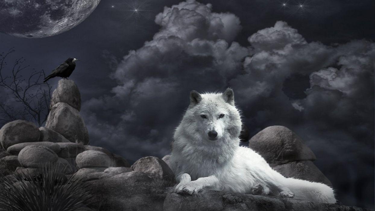 Wolf Dark Gothic Wallpaper