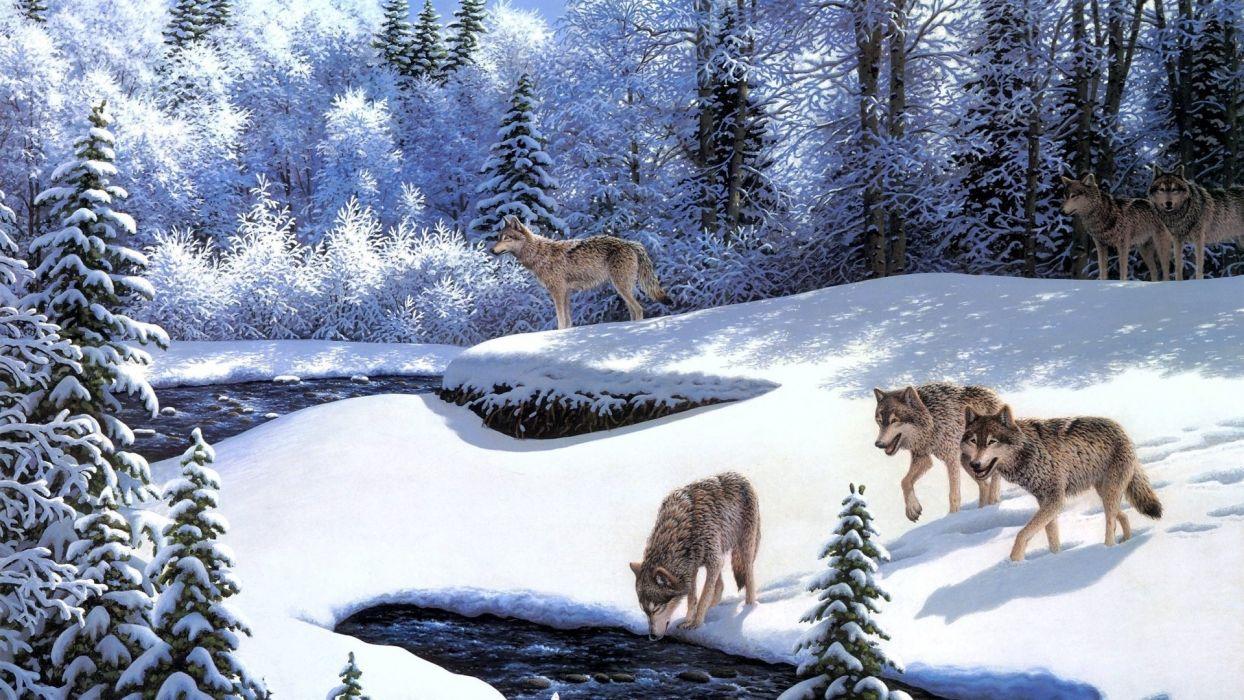 wolf winter   r wallpaper