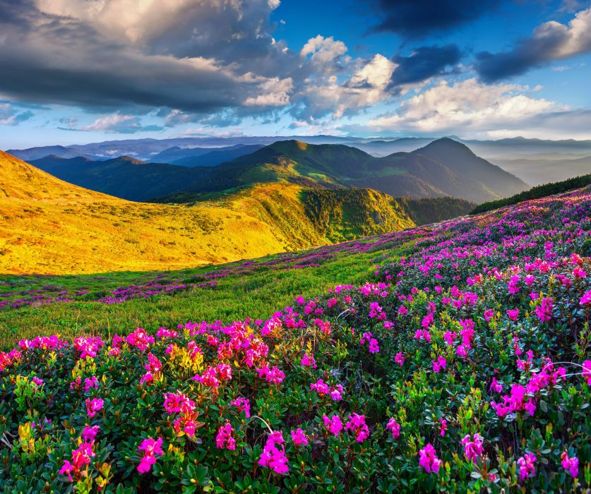 Mountains Azalea Scenery Sky Grass Clouds Nature wallpaper